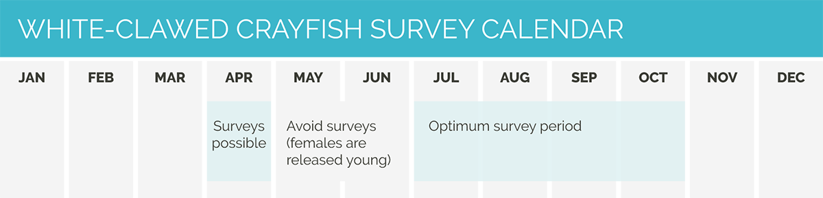 CSA calendar White Clawed Crayfish survey